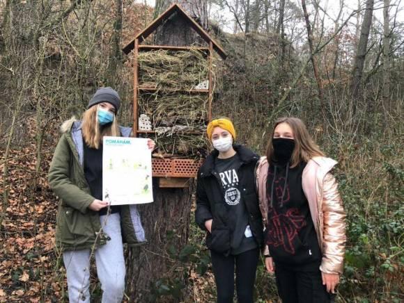 Rekonstrukce hmyzich domků